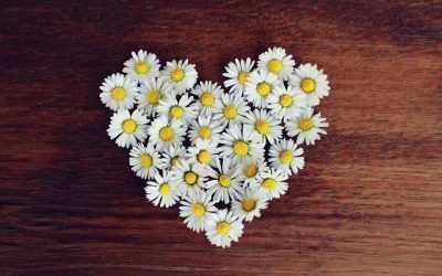 daisy-1403041_640-400x250 Blog